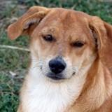 Skye, Chiot à adopter