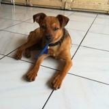 Devyn, Chiot à adopter