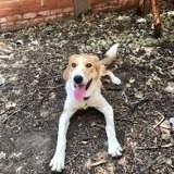 Laika, Chien à adopter
