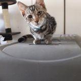 Coco, Chaton à adopter