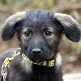 Packo, Chiot à adopter