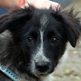 Shelby, Chiot à adopter