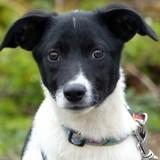 Milo, Chiot à adopter