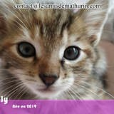 Polly, Chaton à adopter