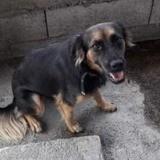 Maya, Chiot à adopter