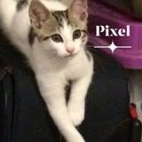 Pixel, Chaton à adopter