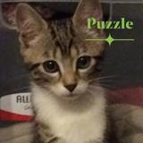 Puzzle, Chaton à adopter
