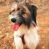 Sam, Chiot à adopter