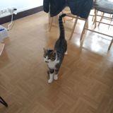 Xena, Chat européen à adopter