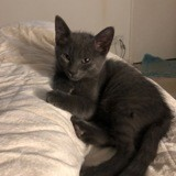 Pablo, Chaton à adopter