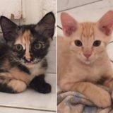 Shera et tsen, Chaton à adopter