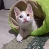 Pralina, Chaton à adopter
