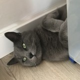 Grisou, Chat à adopter
