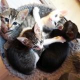 Décrivez votre souhait de chaton !, Chaton à adopter