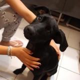 Diego, chiot mâle croisé non lof, Chiot à adopter