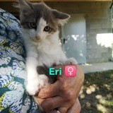 Eri, Chaton à adopter
