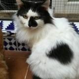 Lulu, Chat à adopter