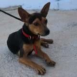 Kassi, Chiot à adopter
