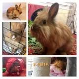 Kouma, Animal à adopter