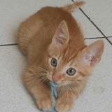 Shercan, Chaton à adopter