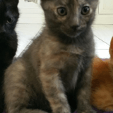 Grisette2, Chiot à adopter