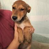 Lusha 5 mois, Chiot à adopter