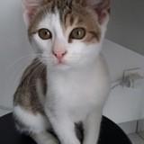 Titou, Chaton à adopter