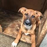 Kiara 4 mois f, Chiot à adopter
