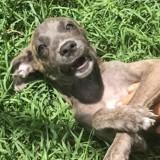 Aluna, chiot femelle croisée non lof, Chiot à adopter