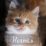 Hermès, Chaton à adopter
