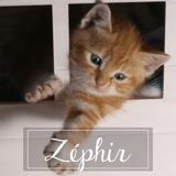 Zephir, Chaton à adopter