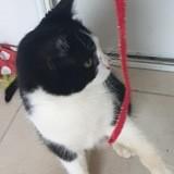 Pandi, Chaton à adopter