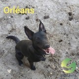 Orleans, Chiot à adopter