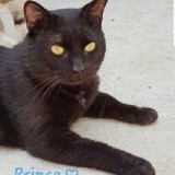 Prince, Chat à adopter