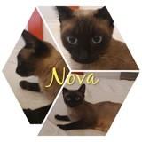 Nova, Chien à adopter