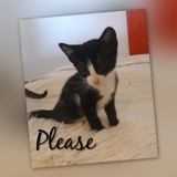 Please, Chaton à adopter