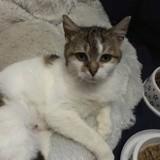 Lexa, Chat européen à adopter