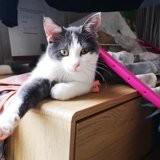 Héliade, la charmeuse, Chat à adopter