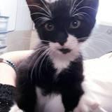Oreo, Chaton à adopter