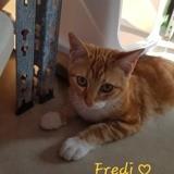 Freddy, Chaton à adopter