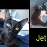 Jet, Chaton à adopter