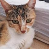 Olivia, Chat à adopter