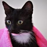 Maria, Chat à adopter