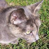 Orane, Chat à adopter
