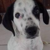 Solly, chiot femelle croisée non lof, Chiot à adopter