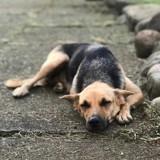 Loca, jeune chienne croisée non lof, Chien à adopter