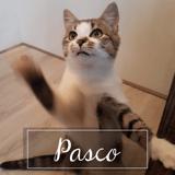 Pasco, Chaton à adopter