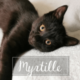 Myrtille, Chaton à adopter
