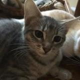 Piglet, Chaton à adopter