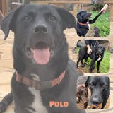 Polo, Chien à adopter